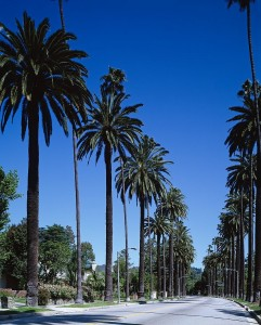palm-trees-743842_1280