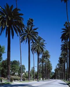 palm-trees-743842_1280