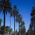 ロサンゼルスボランティア体験談
